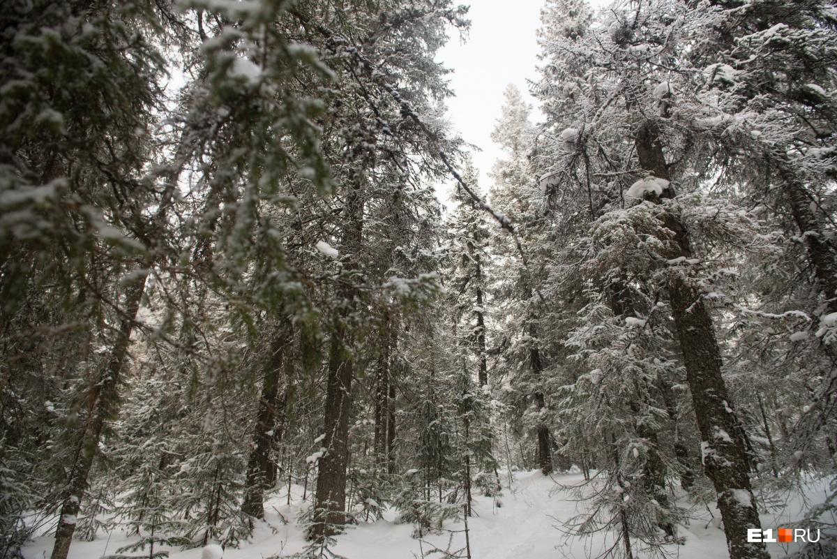 Непролазные леса окружают туристов добрую половину пути