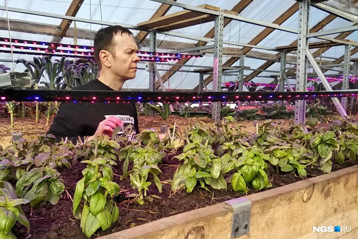 Анатолий Курушин поставил год назад в своей теплице стеллажи. Это расширило площадь посевов, но и работы тоже добавило