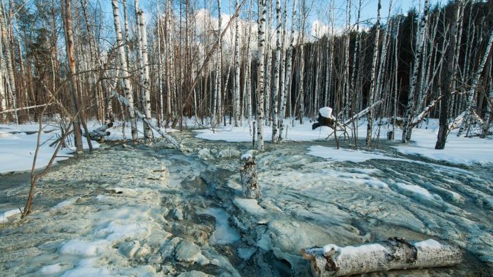 Прокуратура проверит зацементированный берёзовый лес на ЖБИ