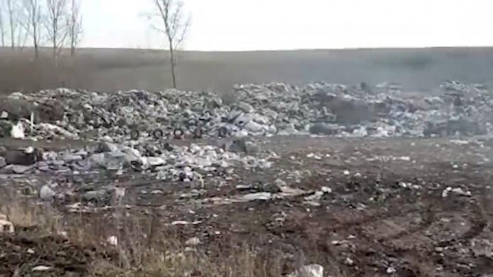 Полчища крыс и горы отходов: что принесла мусорная реформа в Башкирию