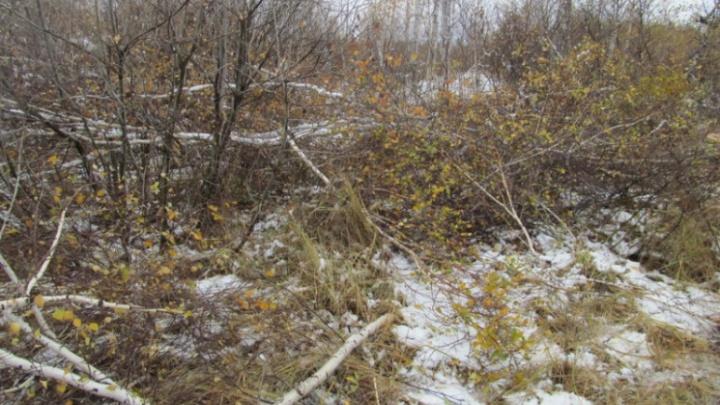 Сократила путь через лес: спасатели нашли заблудившуюся под Курганом женщину