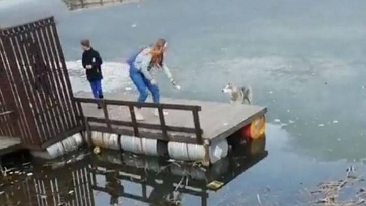 «Рисковали, конечно»: в Ярославле дети спасли собаку со льда