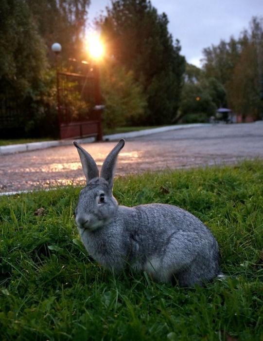 Прохожие встречают здесь кроликов разных цветов