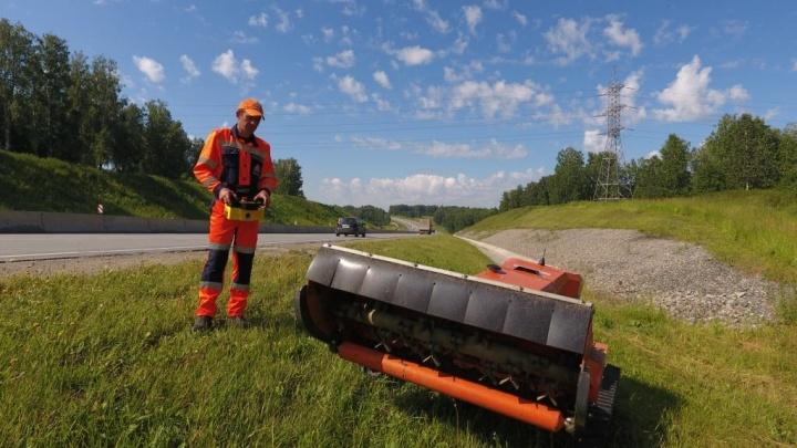 Дорожники отправили робота подстригать газоны вдоль трасс под Новосибирском (видео)