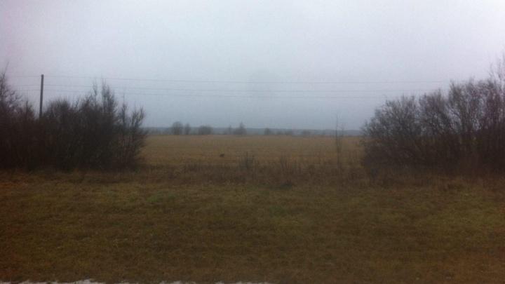 В Ярославской области депутат нашла объеденный труп мужчины
