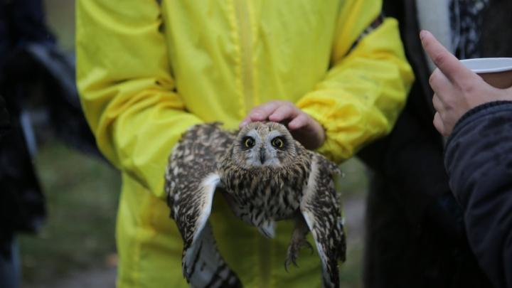 Школьники нашли ласковую сову с переломанными крыльями и собирают деньги на лечение