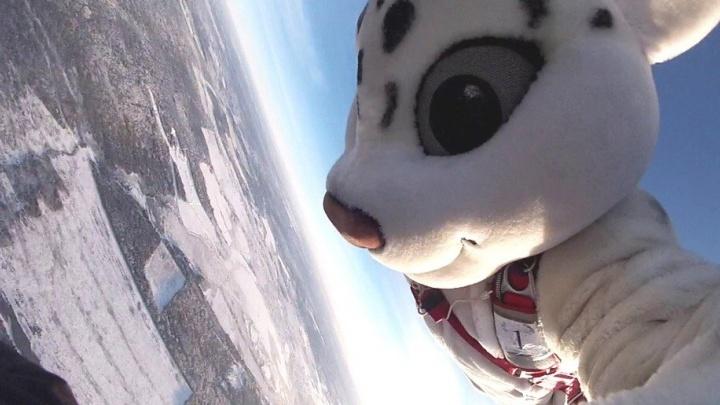 В преддверии Нового года Снежный барс, Дракула и Человек-паук прыгнули с парашютами под Нижним Тагилом