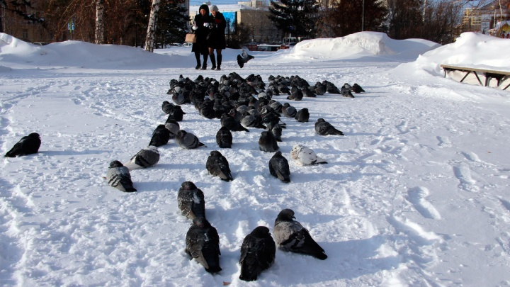 Тёплое Рождество: омские синоптики рассказали о погоде в последние дни праздников