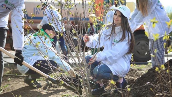 Марафон чистого воздуха: красноярцы привыкают высаживать деревья и правильно выбрасывать мусор