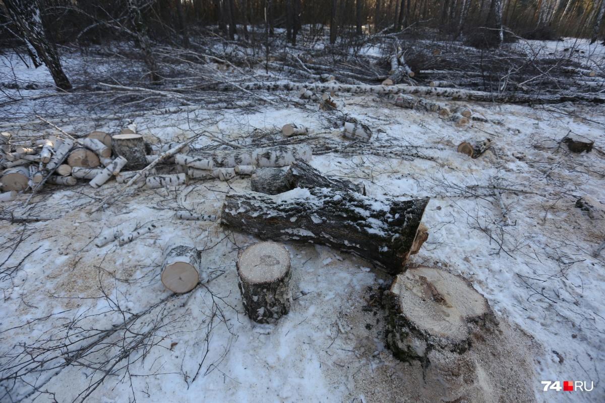 Под санитарную вырубку в сквере попали более 600 деревьев