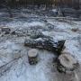 «Это как чума»: в челябинском парке приостановили вырубку деревьев в районе «тропы здоровья»