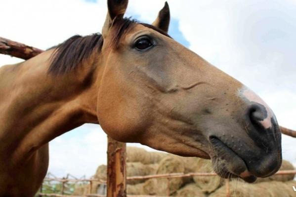 О количестве пострадавших животных не сообщается