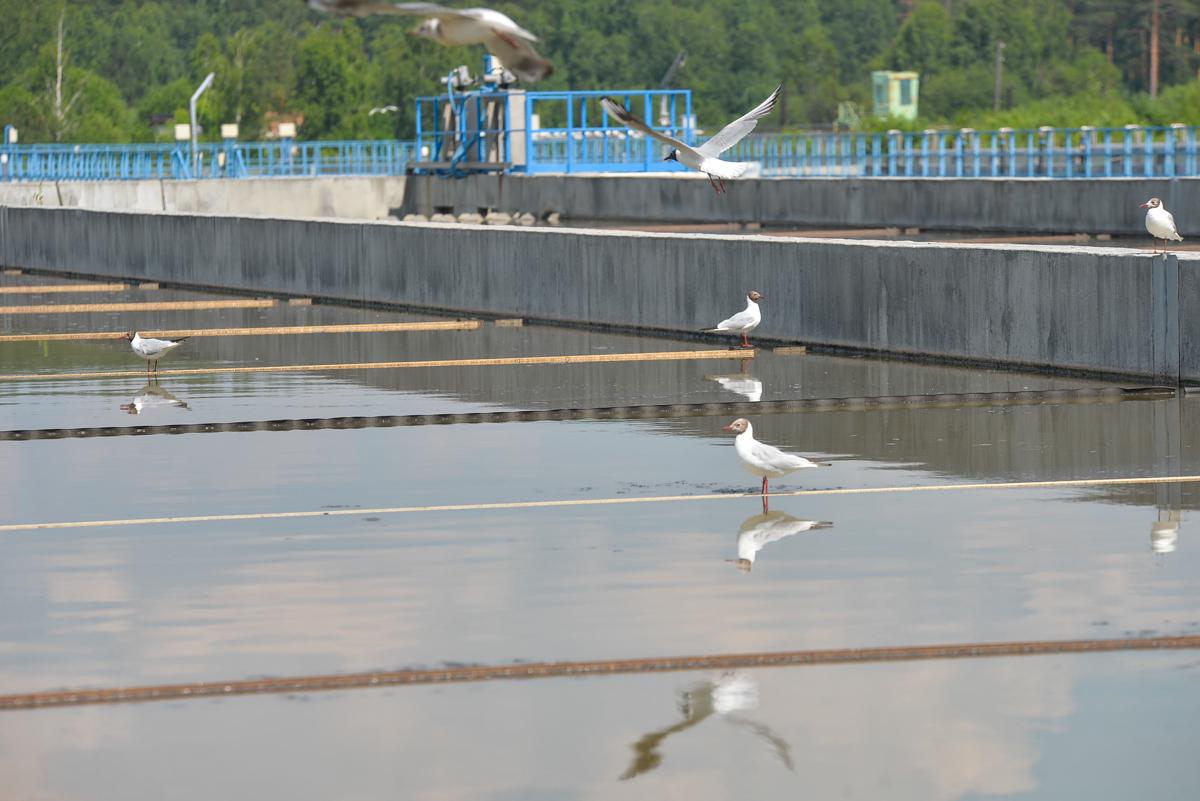 Японцы запустили в Екатеринбурге установку, которая поможет бактериям есть канализационные отходы