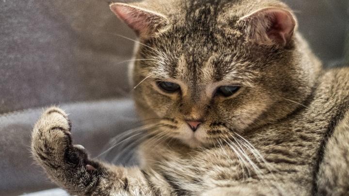 Батареи замурчали: как СМИ иллюстрируют новости про отопление (тут сплошные котики!)