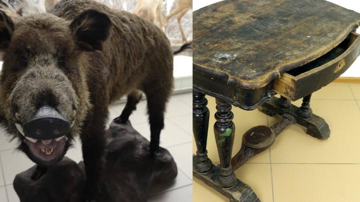 Краеведческий музей купил чучело позитивного кабана и столетний столик