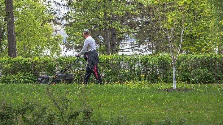 На борьбу с аллергией: куда обратиться для уничтожения сорняков во дворе