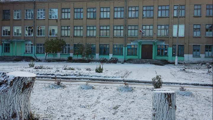 «Подарили котёнка»: у детей из школы под Челябинском выявили новые случаи стригущего лишая
