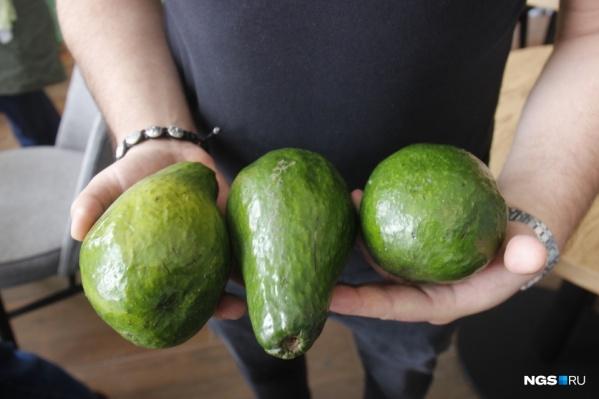 Мы тратим на авокадо сотни рублей, а в той же Мексике это обычный повседневный продукт, как для нас картошка