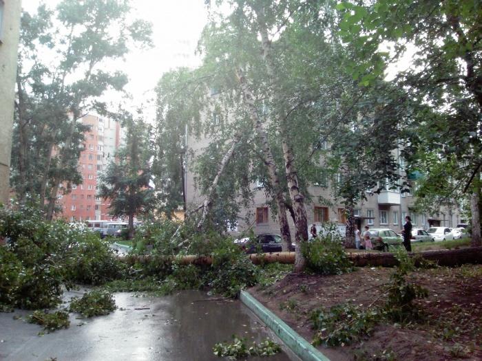 Упавший тополь перегородил дорогу около дома на ул. Чехова, 144