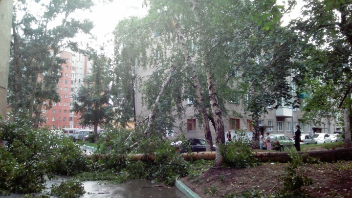 Огромный тополь упал на дом в Октябрьском районе