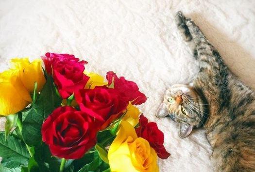 Поздравь кота: фотоподборка нежных и смешных котиков в честь их праздника