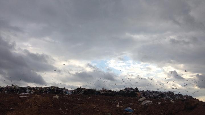 В Ростове собирают подписи против строительства мусороперерабатывающего завода в Левенцовке