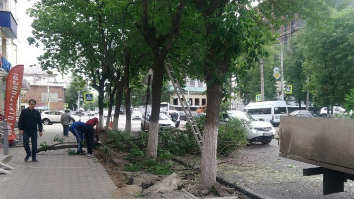 Пилят ветки над головой: уфимка пожаловалась, что на улице Ленина прохожих подвергают опасности