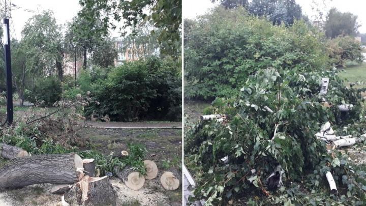 «Всё по закону»: в сквере у цирка устроили санитарные вырубки деревьев