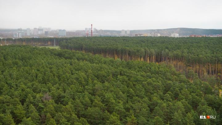 Екатеринбуржцев позвали обсудить, каким должен стать Юго-Западный лесопарк