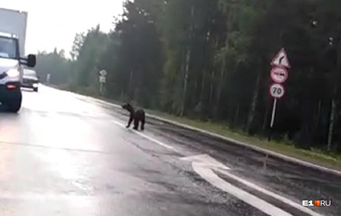 Медвежонок гулял по дороге и совсем не боялся людей