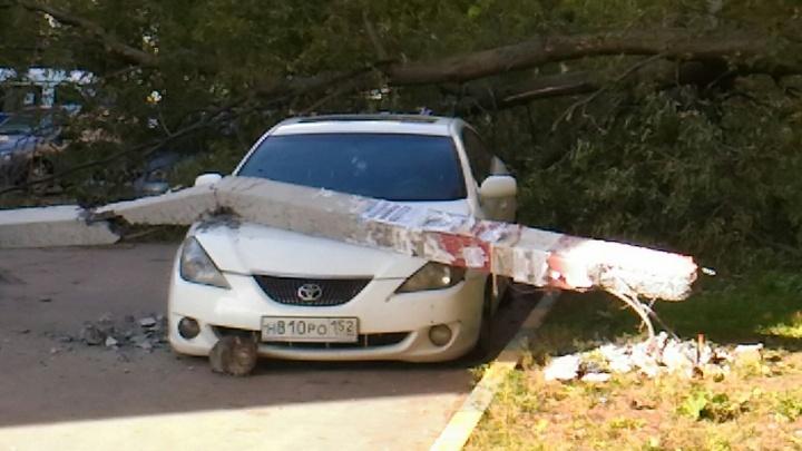 Фото дня. Нижегородское полотно: кот, автомобиль и упавший столб