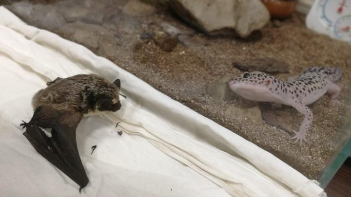 Зверек потерялся и ослаб: в центре Уфы школьница спасла летучую мышь