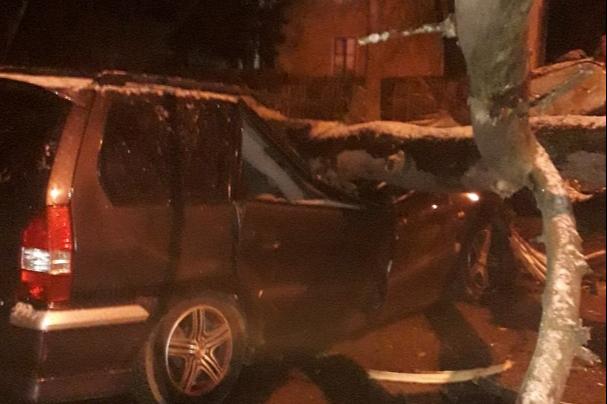 В Нижнем Новгороде из-за сильного ветра дерево расплющило припаркованный автомобиль