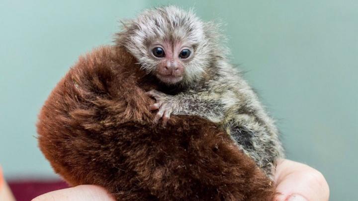 В ростовском зоопарке отремонтируют вольеры для приматов и страусов