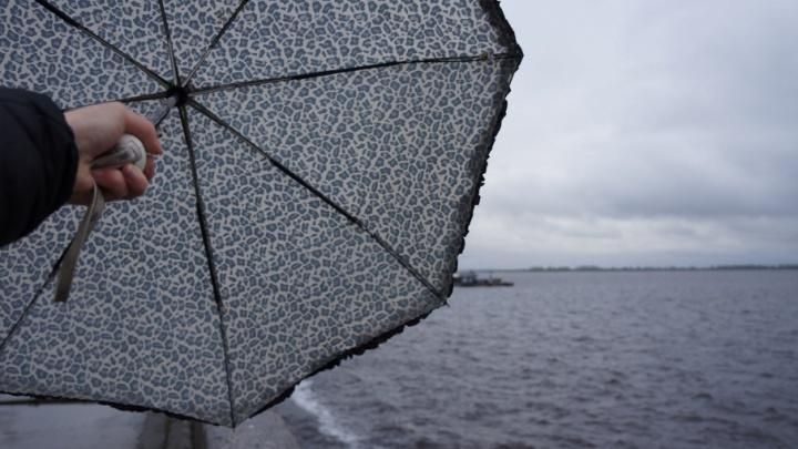 Дожди и заморозки: к концу недели температура в области ночью может опуститься ниже нуля