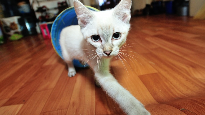 Почему кошки пьют воду из-под крана: ветеринар отвечает на вопросы о правильном питании питомцев