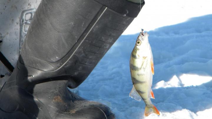 Восемь идей для выходных: ловим рыбу своей мечты, идём на Ирину Муравьёву, зубрим «жи-ши»