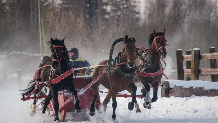 В Усть-Качке устроят заезды на русских тройках и бега на орловских рысаках