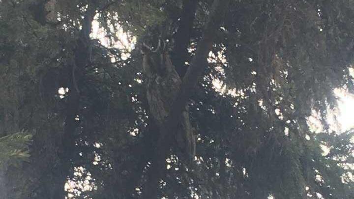 В Башкирии в центр села прилетели суровые хищники