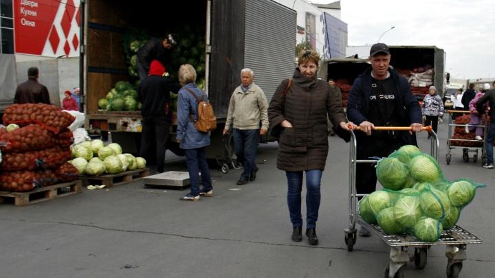 Площадь Маркса завалили мешками с картошкой, капустой и заставили ведрами яблок