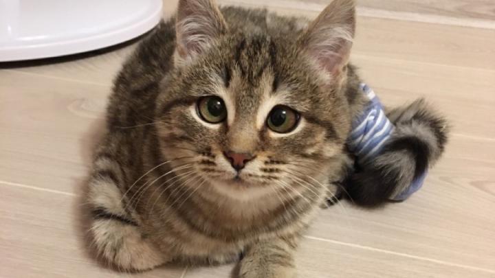 Чудом выжившему котенку из Новосибирска ищут новую семью
