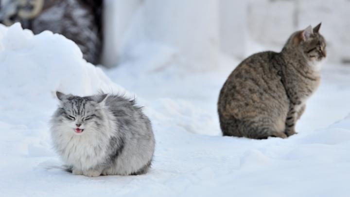 Утепляемся: до середины недели в Екатеринбурге будет морозно и без осадков