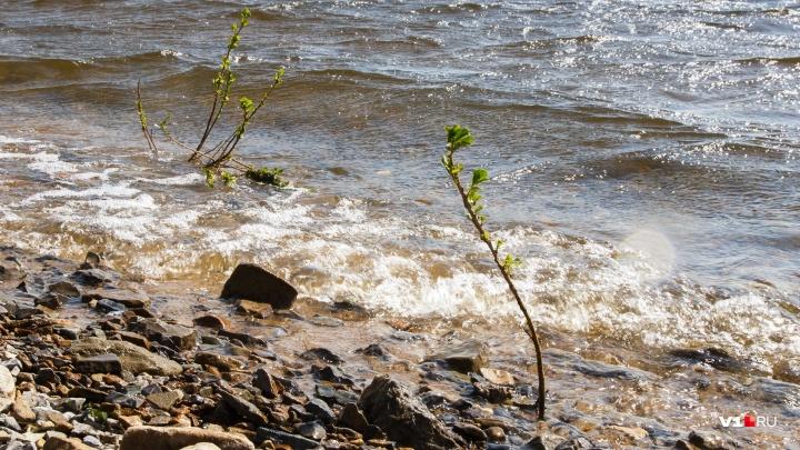 В Волгоградской области водитель заехал в реку и утонул в салоне отечественной машины