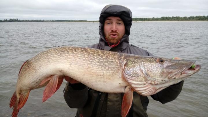 Новосибирец вытащил из-под коряги в Оби огромную рыбу