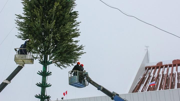 Главную городскую ёлку в центре Омска собирают из 230 живых сосен