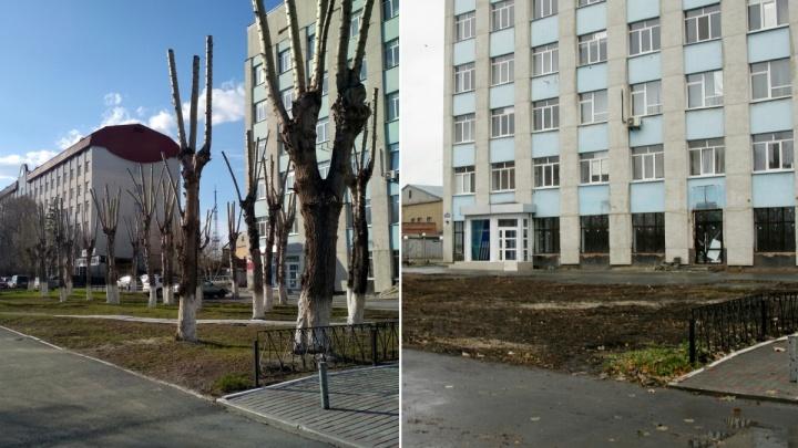 Деловой центр «Республика» накажут за вырубку 39 тополей для строительства новой парковки