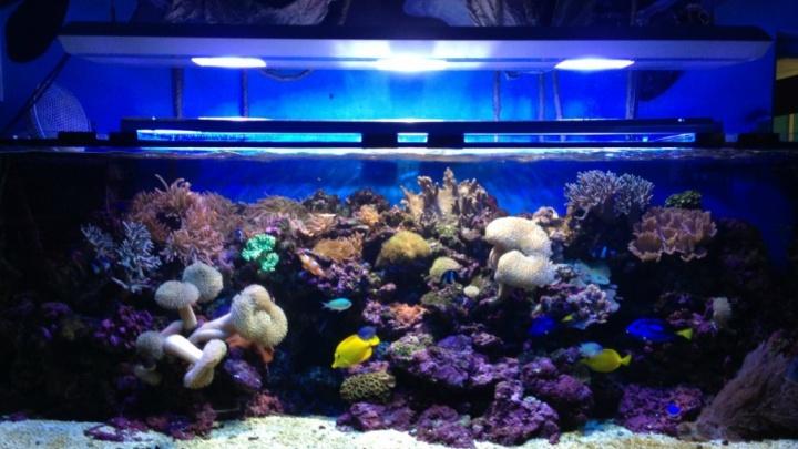 «Нереально высокая доходность»: в Челябинске выставили на продажу выставку аквариумов
