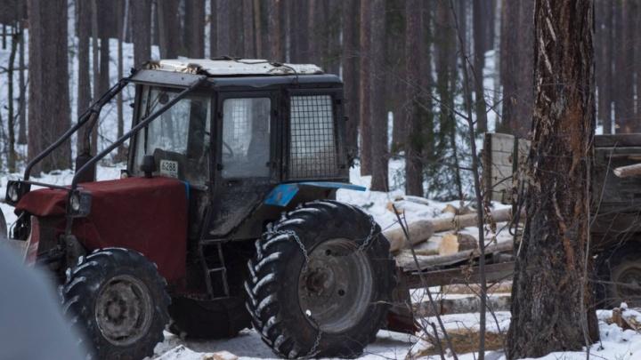 Общественники обнаружили вырубку леса на берегу озера Тургояк и туалеты на льду