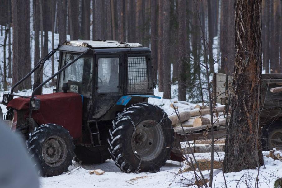 Спиленные на берегу озера Тургояк деревья вывозили на спецтехнике