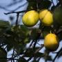 Красные бананы и рука Будды: в уфимском лимонарии начался сезон цветения